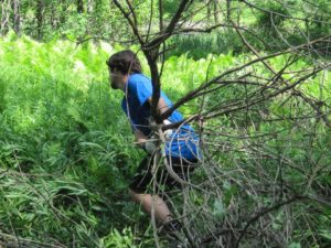 Volunteers Remove Invasives in the Berkshires