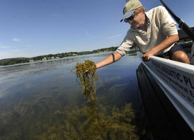 State grant money will go toward combatting invasive species in Candlewood Lake and other CT waters
