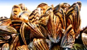 CT DEEP announces grants to fight aquatic invasive species