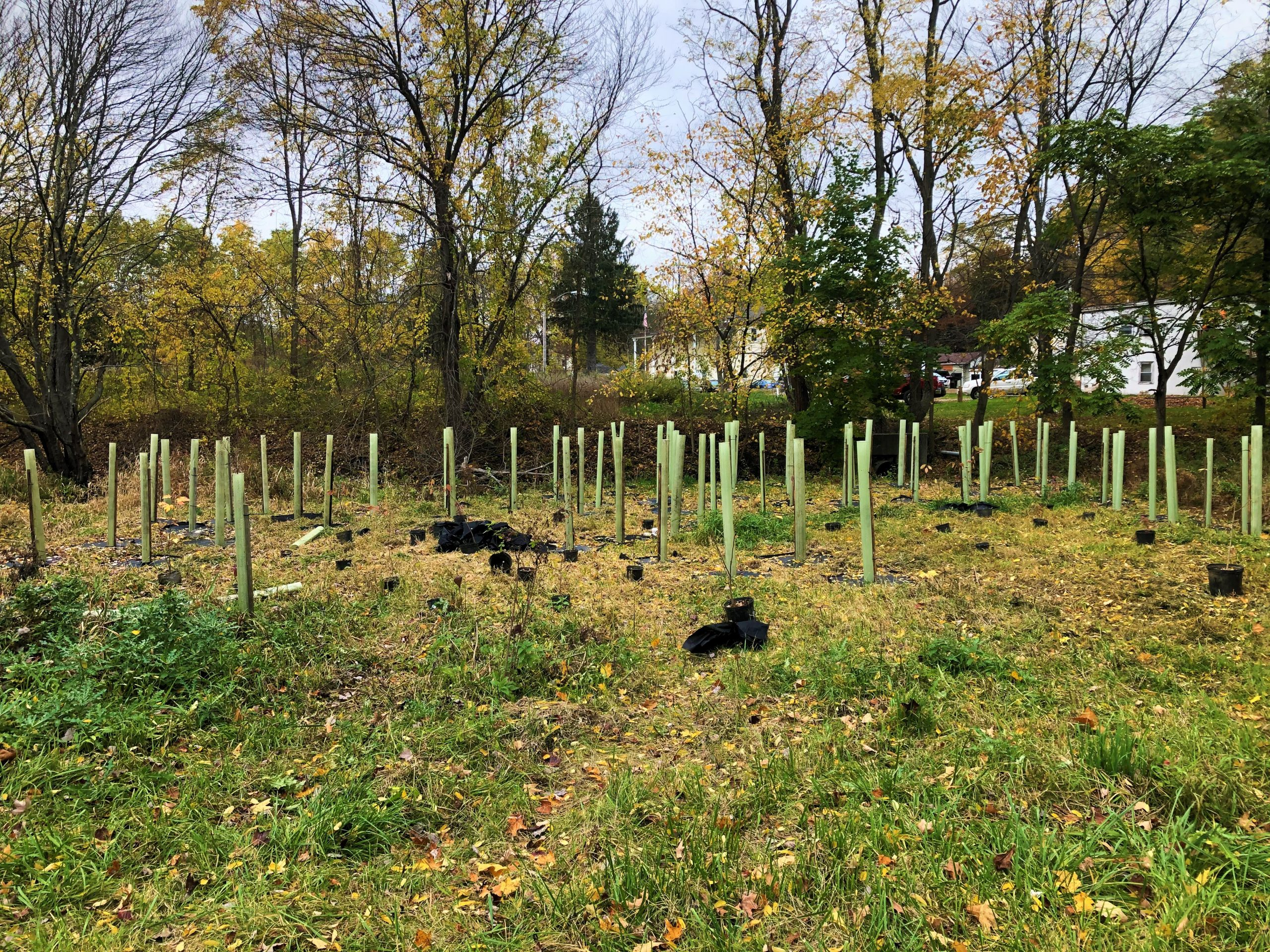 Newly installed native trees and shrubs on Wells Brook behind Dover Plaza.