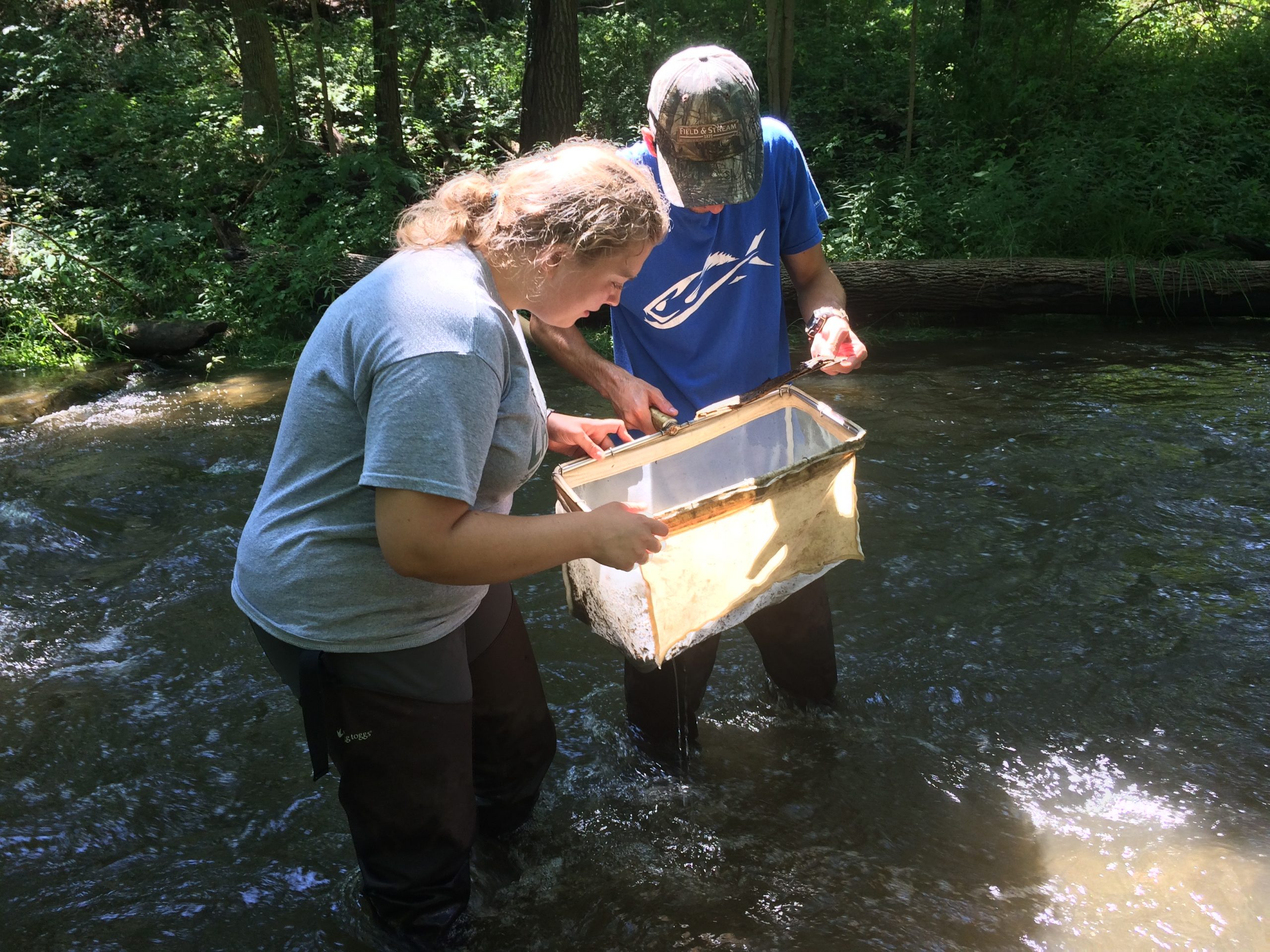 River Stewards Sampling Macroinvertebrates